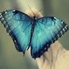 Puzzle - Krásný motýl