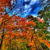 Puzzle - Podzim