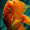 Puzzle - Domácí 3D rybka…