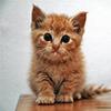 Puzzle - Koťátko