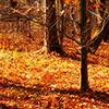 Puzzle - podzim 2