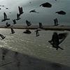 Puzzle - Hejno ptáků