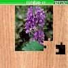 Puzzle - Květiny 2