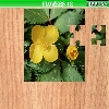 Puzzle - Květiny 4
