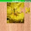 Puzzle - Květiny 5