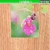 Puzzle - Květiny 3
