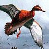 Puzzle - Létající kachny…