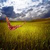 Puzzle - Motýl a pole