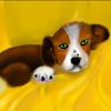 Puzzle - Malé štěně