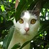Puzzle - Zírající kotě…