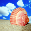 Puzzle - Mořská mušle