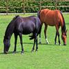 Puzzle - Dva koně