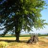 Puzzle - Strom a příroda…