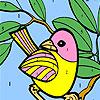 Omalovánka - Pták