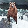 Puzzle - Medvěd