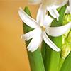 Nádherná květina