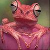 Rudý žabák…