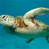 Puzzle - želvy