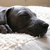 Puzzle - Spící štěnátko…