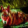 Liška v baži…
