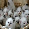 Puzzle - Koč…