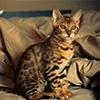 Puzzle - Kočka