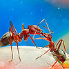 Puzzle - mravenci