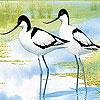 Puzzle - Ptáci